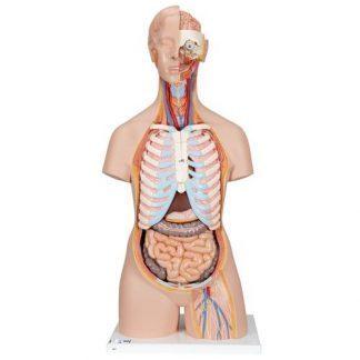 Klassisk Unisex mänsklig torsomodell med öppen rygg, 21 delar