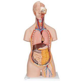 Klassisk Unisex mänsklig torsomodell med öppen nacke och rygg, 18 delar
