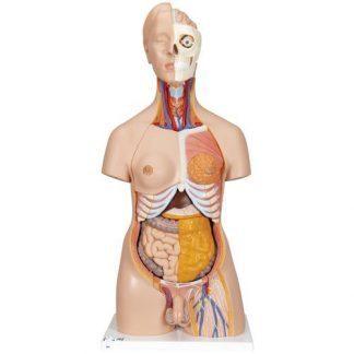 Deluxe dubbelkönad mänsklig torsomodell, 20 delar
