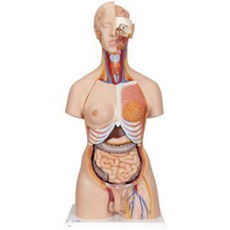 Deluxedubbelkönad torsomodell med öppen rygg, 28 del